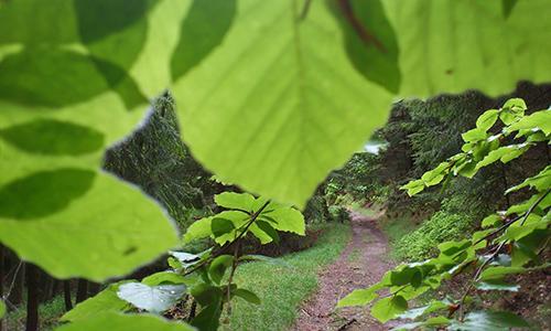 Einführungstag Fortbildung Environmental Somatics September
